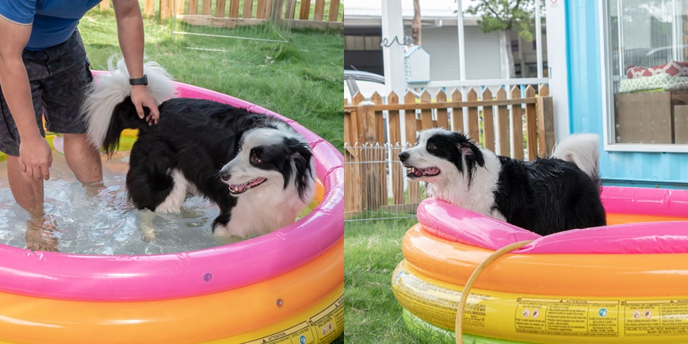 洗狗趣 豐原寵物自助洗 小型充氣泳池