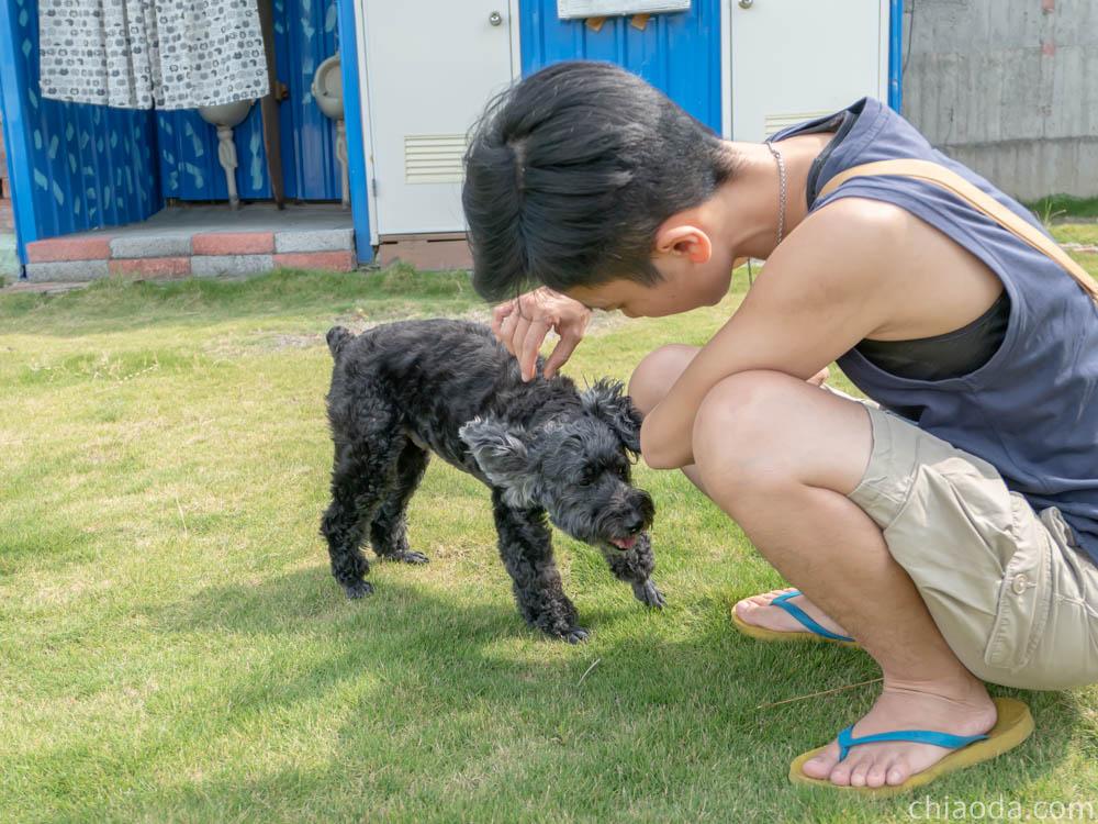 洗狗趣 豐原寵物自助洗 大草皮