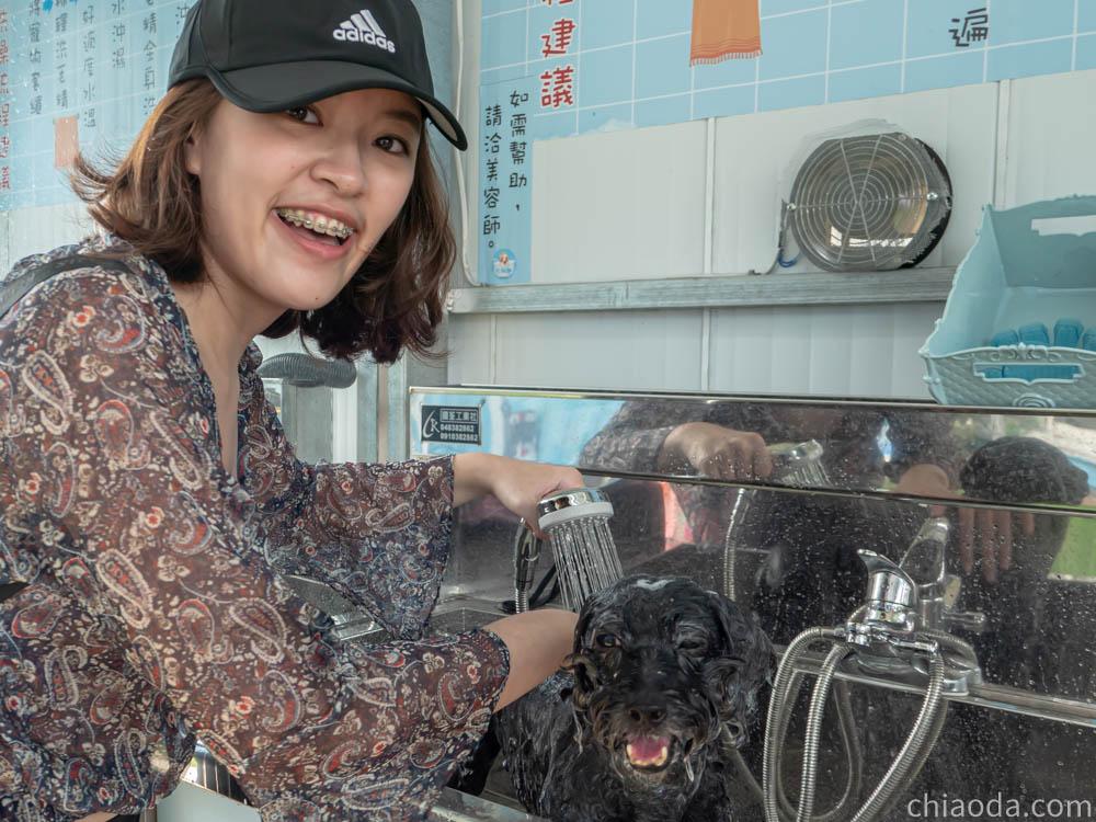 洗狗趣 豐原寵物自助洗