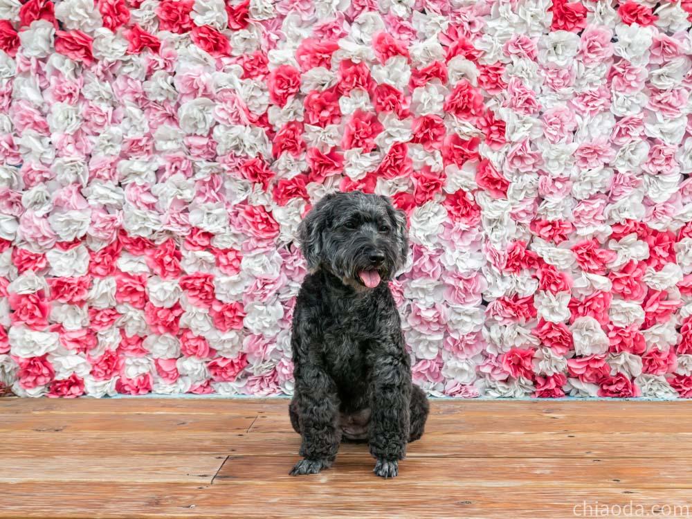 洗狗趣 豐原寵物自助洗 網美牆